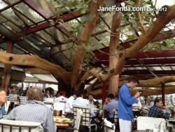 jfbrazilfigtreerestaurant3-web