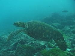 sea-turtle-457x304