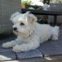 Profile picture of Cilia
